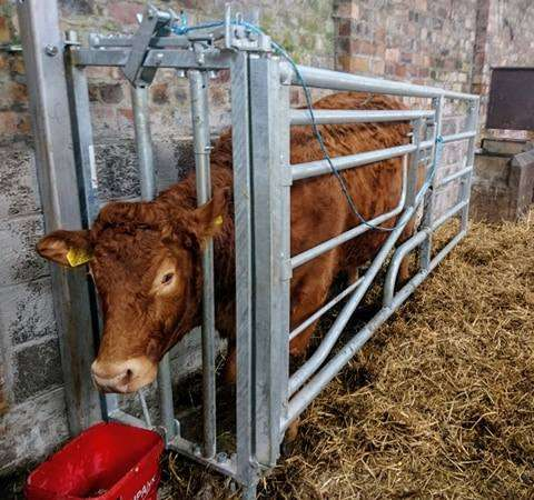 Calving Gates by BoSteel
